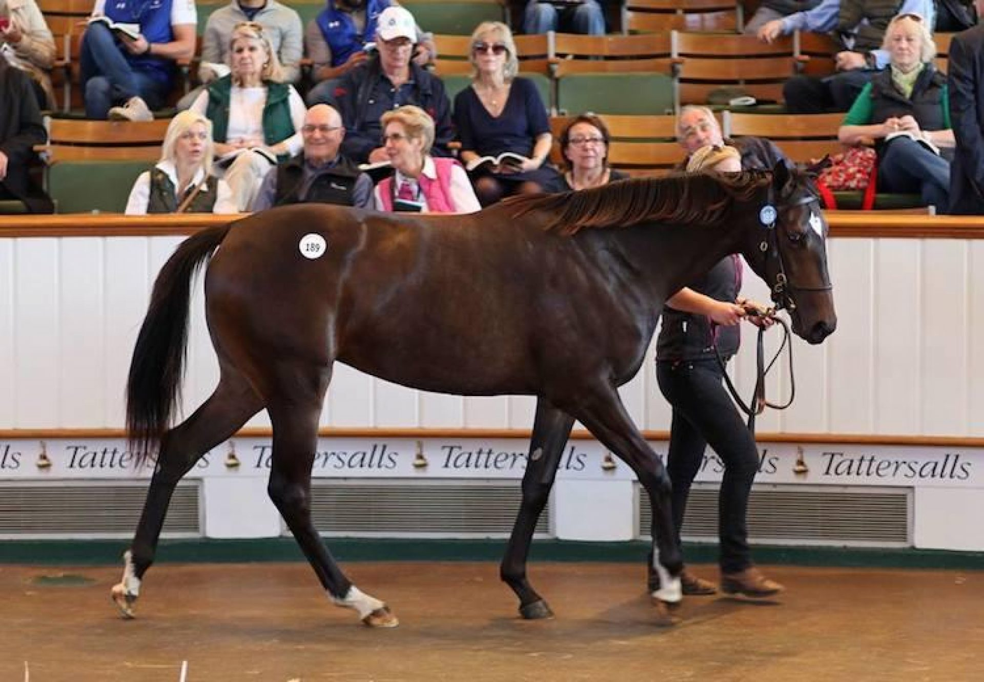 Galileo ex Wannabe Better yearling filly selling for 3.4 million guineas