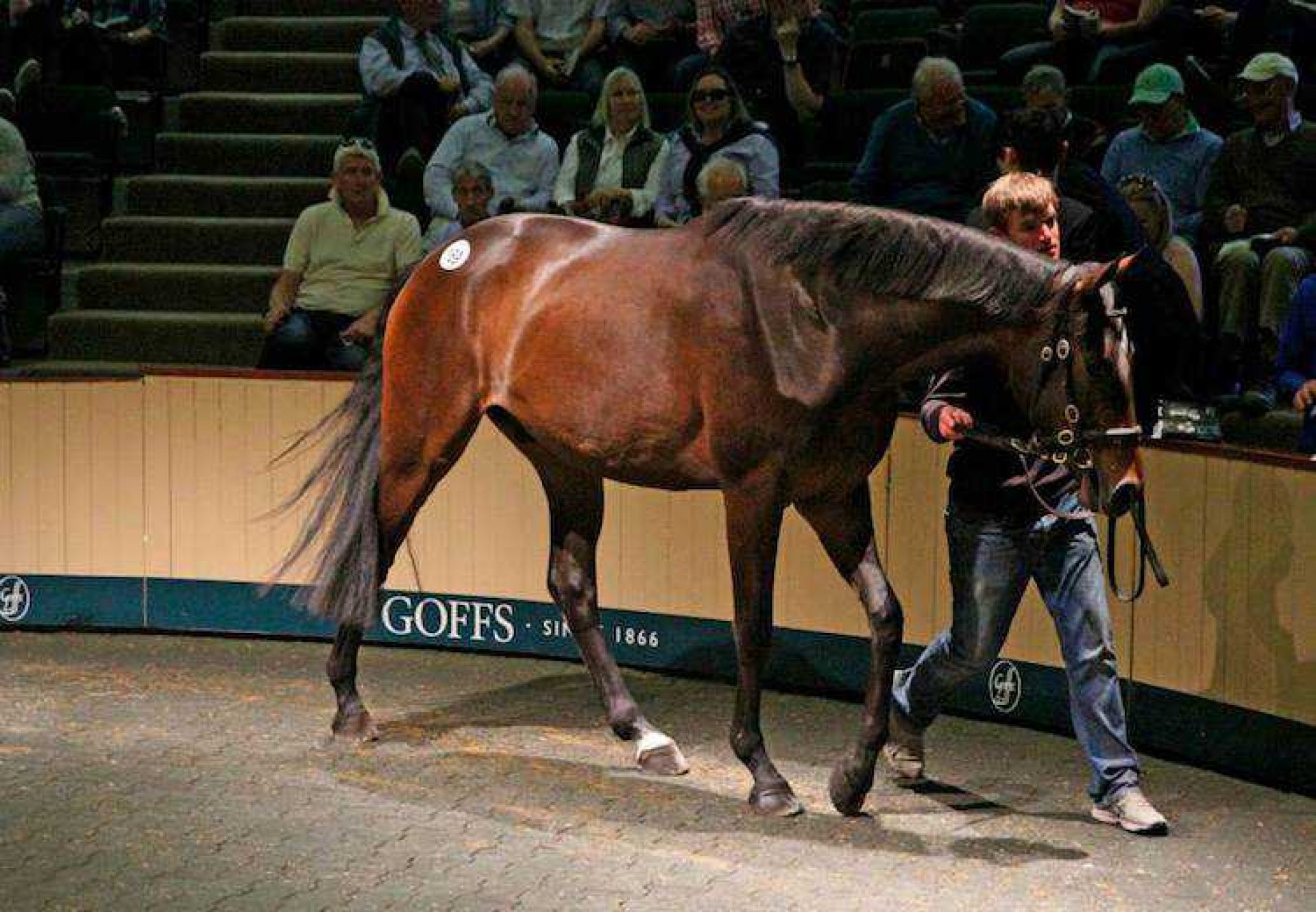 Getaway ex Listening gelding selling for €150,000