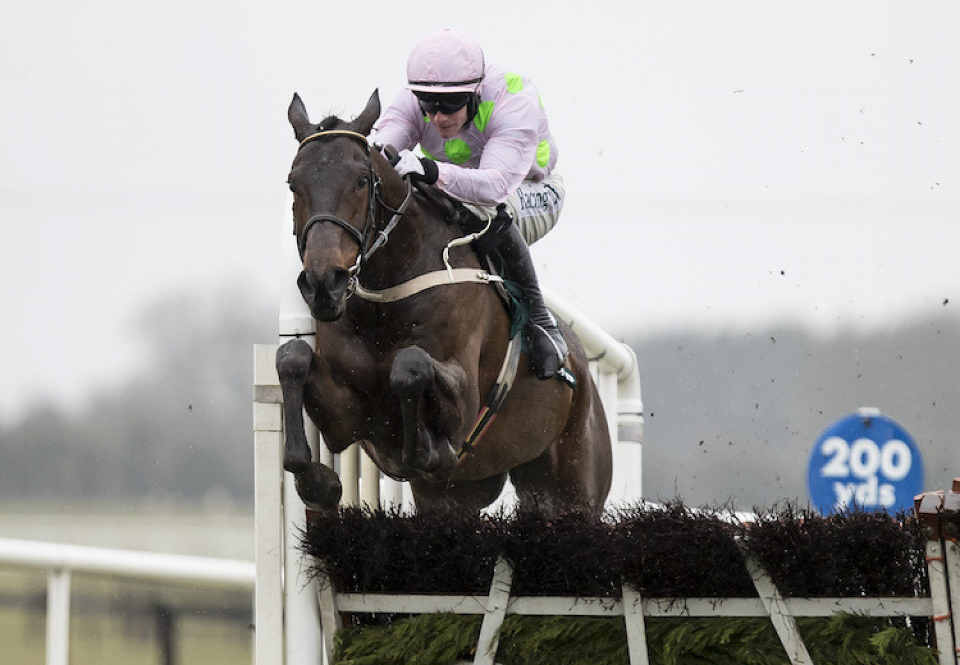 Getabird (Getaway) winning a G2 Novice Hurdle at Fairyhouse