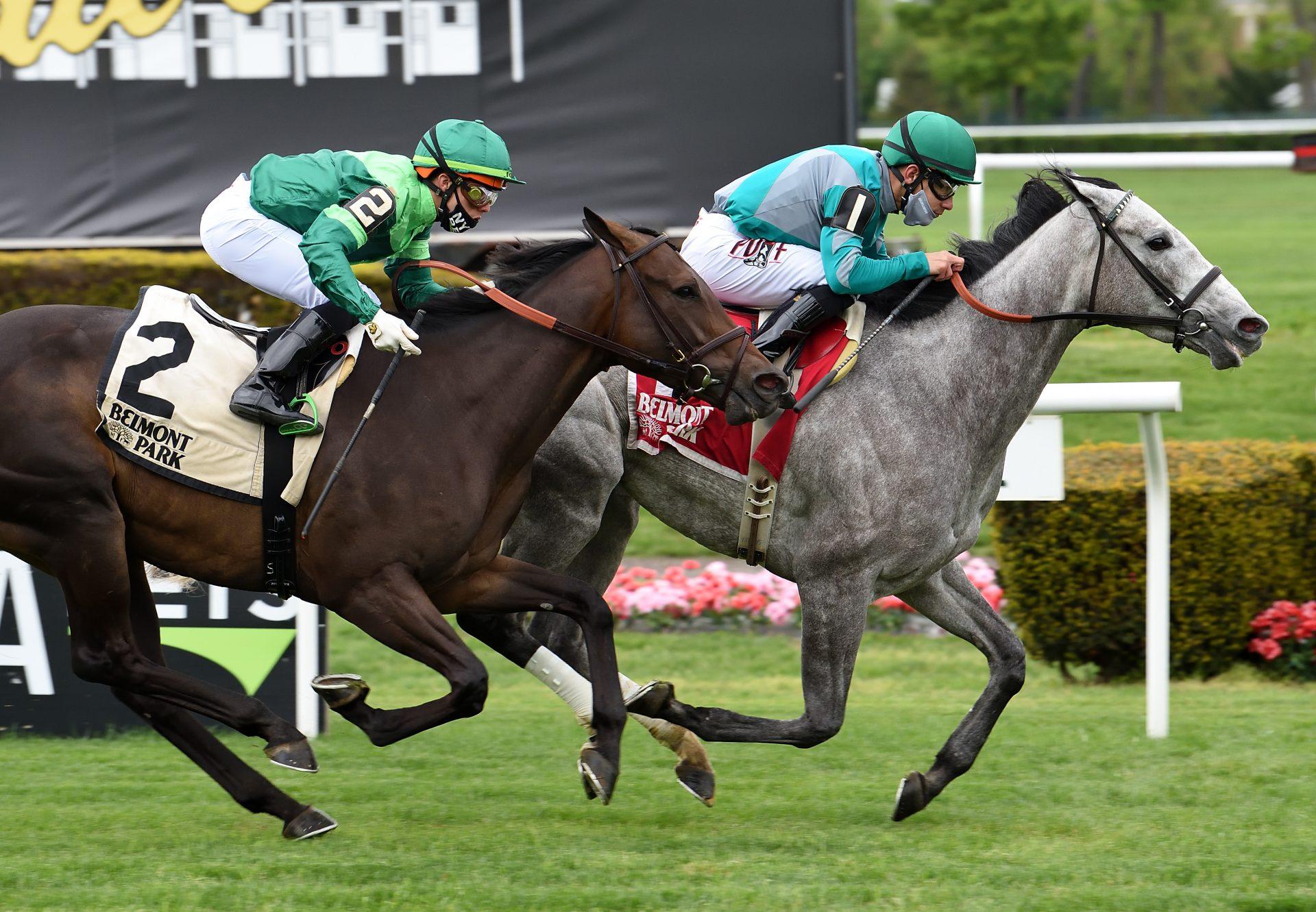 Harveys Lil Goil (American Pharoah) Gr.3 Beaugay Stakes at Belmont