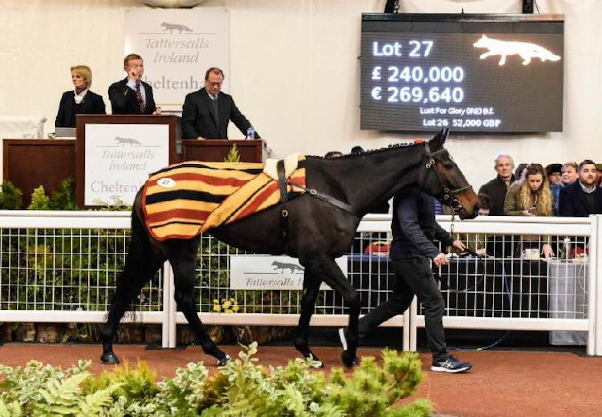 Lust For Glory (Getaway) selling for £240,000 at Cheltenham