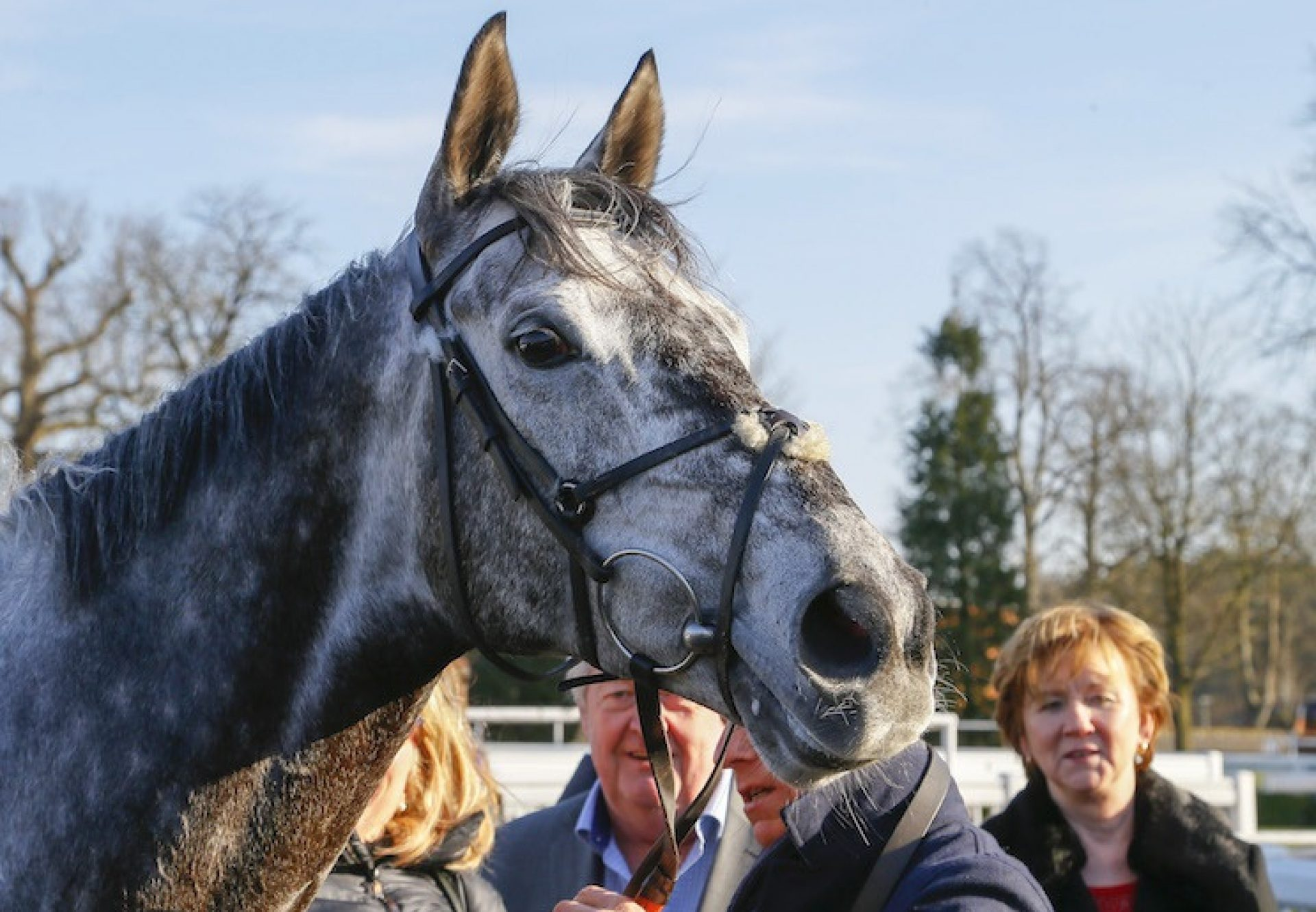 Master The World (Mastercraftsman) after winning the G3 Winter Derby at Lingfield