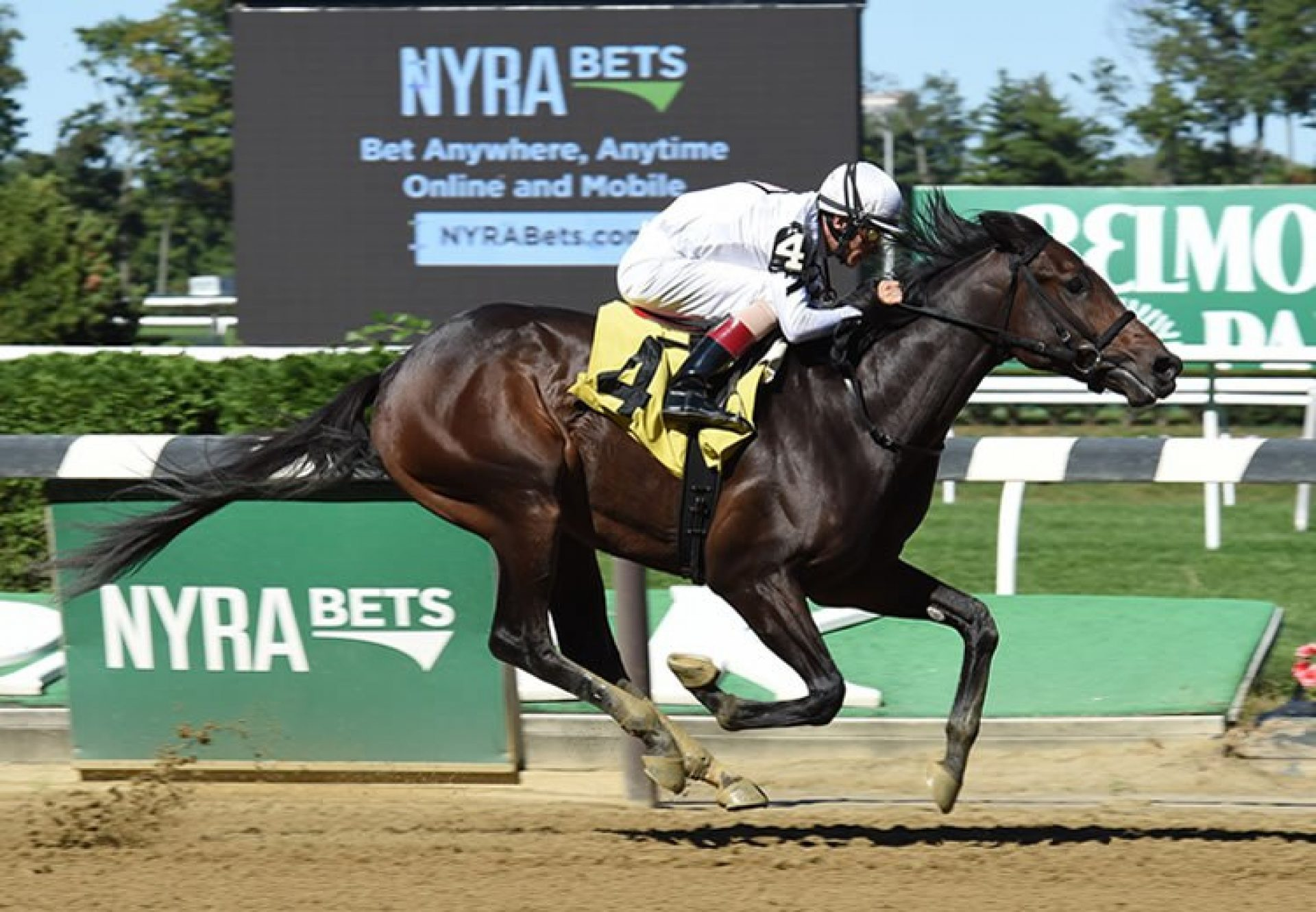 Mo Town (Uncle Mo) winning his maiden at Belmont Park