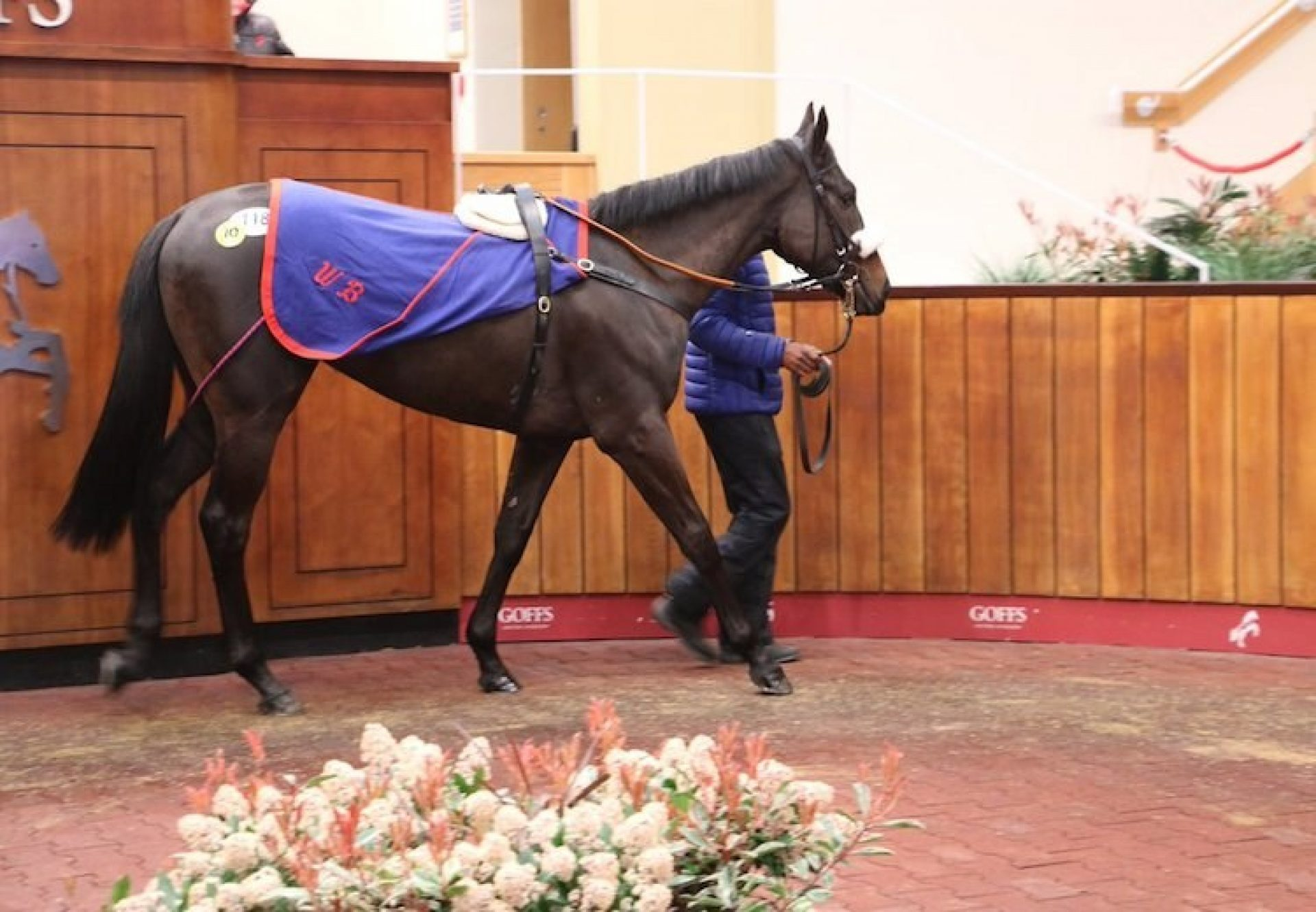 No Nay Never ex Aitch filly selling for £85,000 at Doncaster