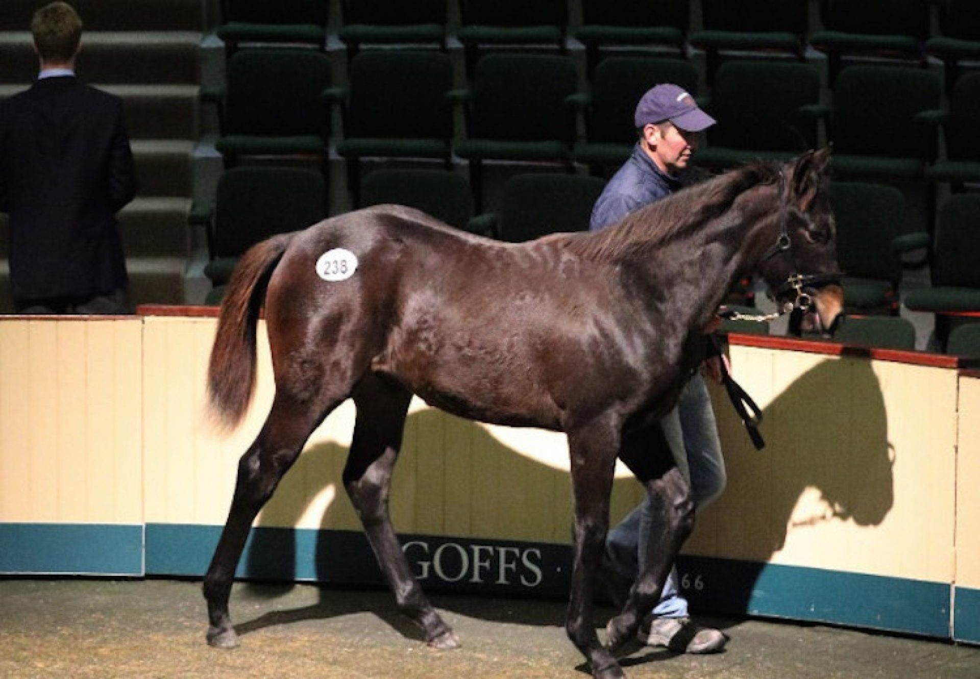 No Nay Never ex Dorcia colt selling for €85,000 at Goffs