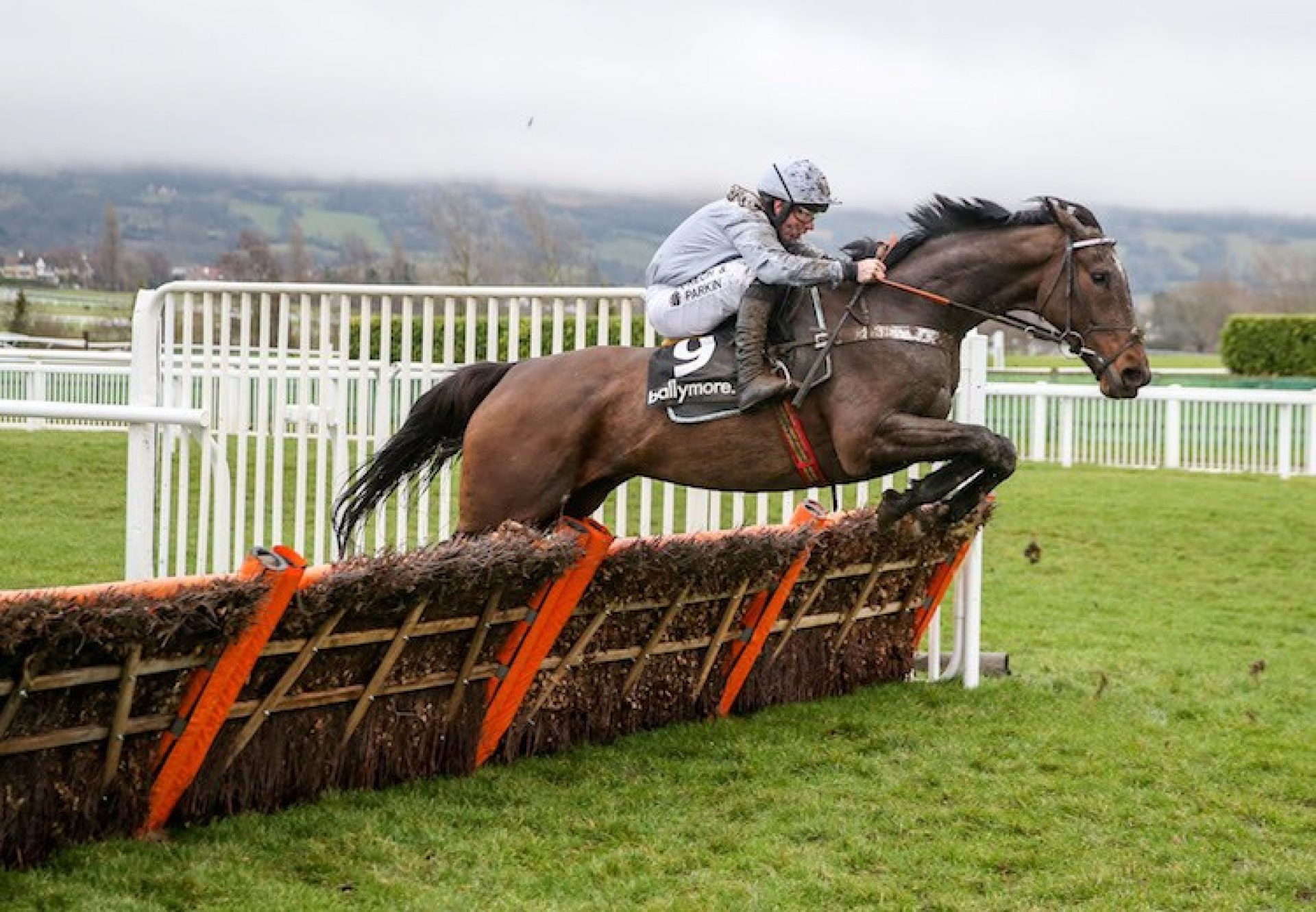 Santini (Milan) winning the G2 Ballymore Classic Novices' Hurdle at Cheltenham