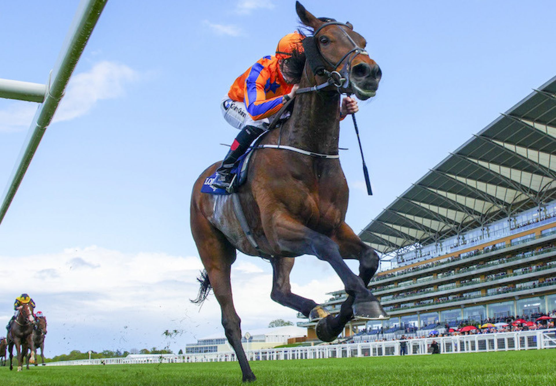 Torcedor (Fastnet Rock) winning the Sagaro Stakes (Gr.3) at Ascot