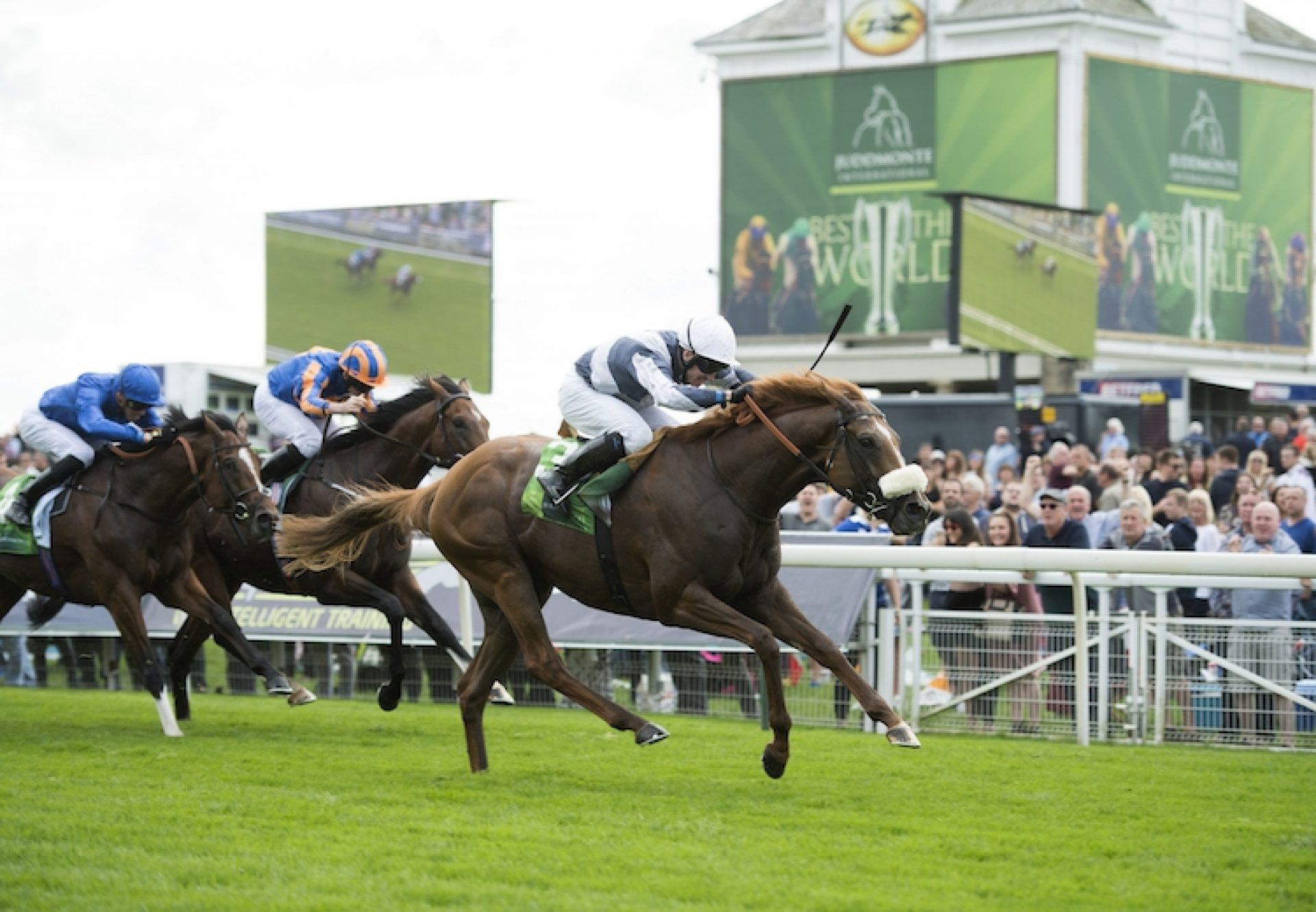 Ulysses (Galileo) winning the Juddmonte International (Gr.1) at York