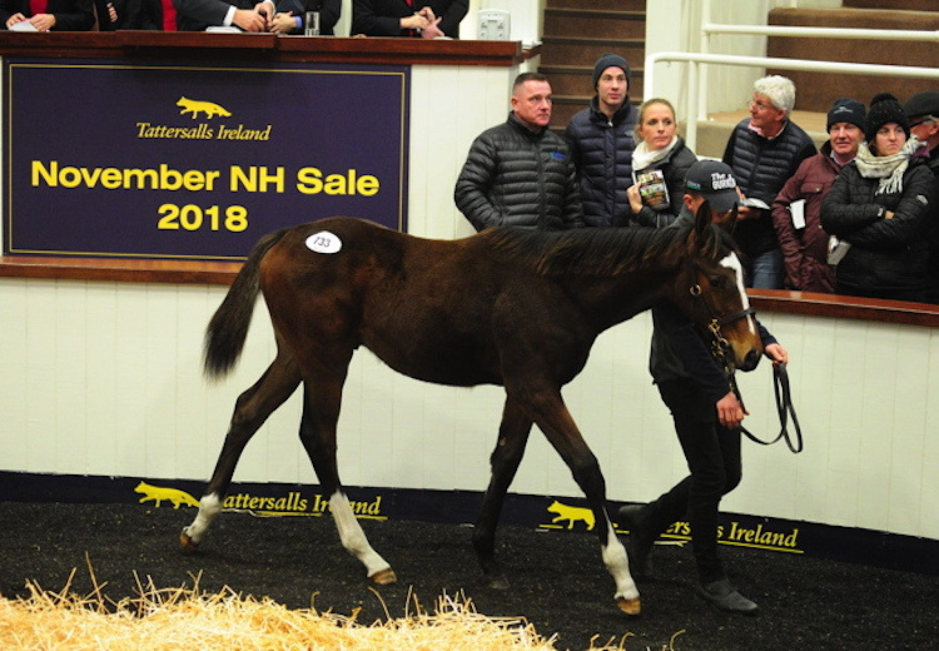 Walk In The Park ex Milly's Gesture colt foal selling for €80,000 at Tattersalls Ireland