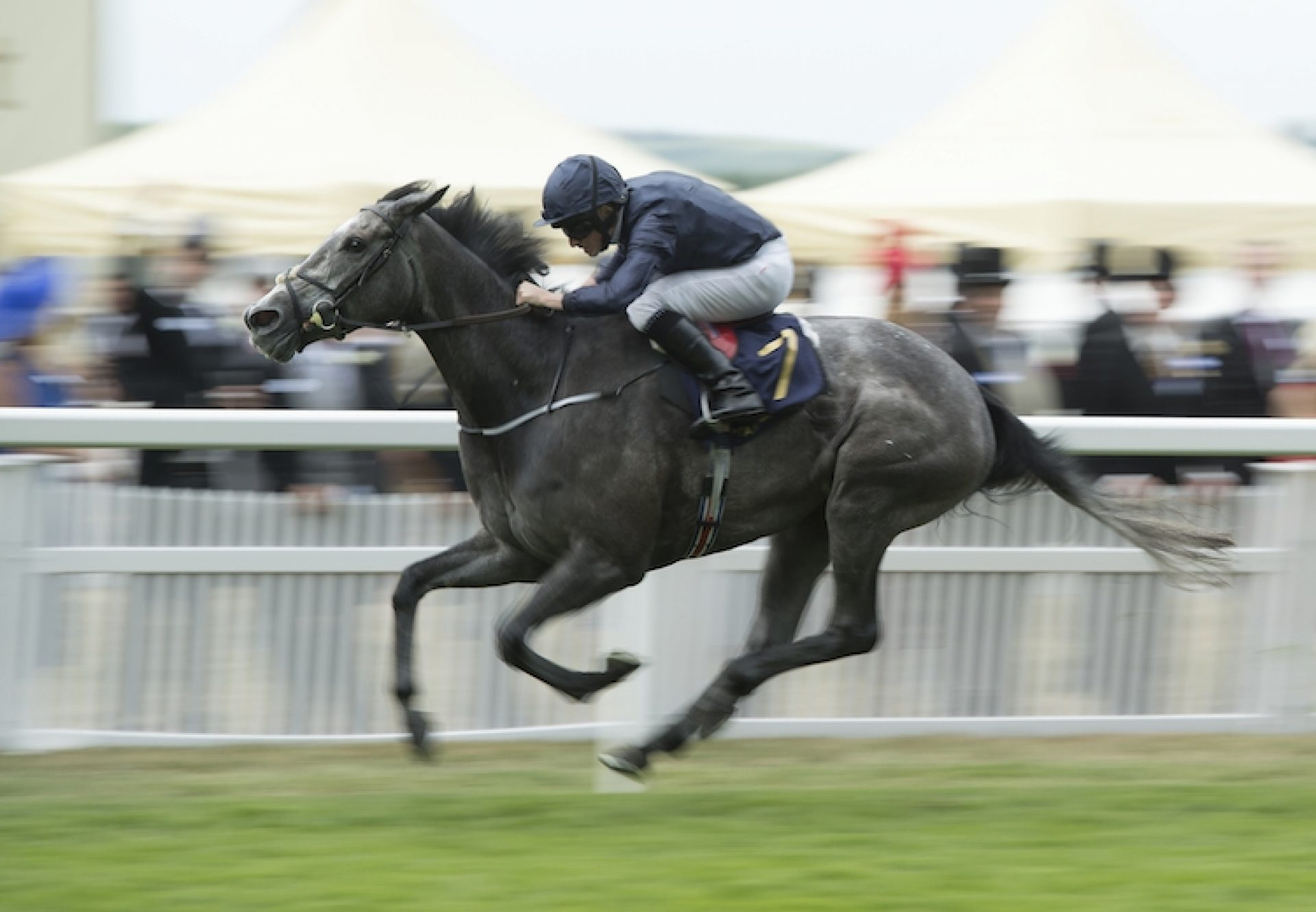 Winter (Galileo) winning the Coronation Stakes at Royal Ascot