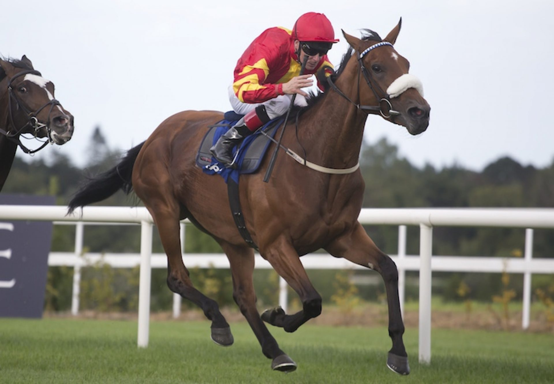 Zhukova (Fastnet Rock) winning the G3 Enterprise Stakes at Leopardstown