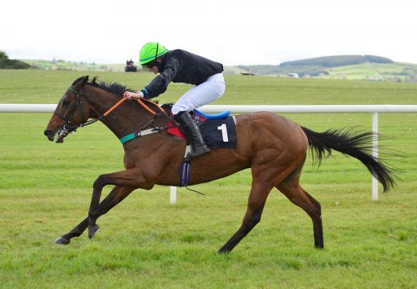 A Fortune Out West (Soldier Of Fortune) Wins The 4 YO Maiden At Punchestown
