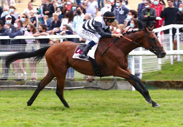 Merchant Navy X Chasing Mammon colt conformation shot