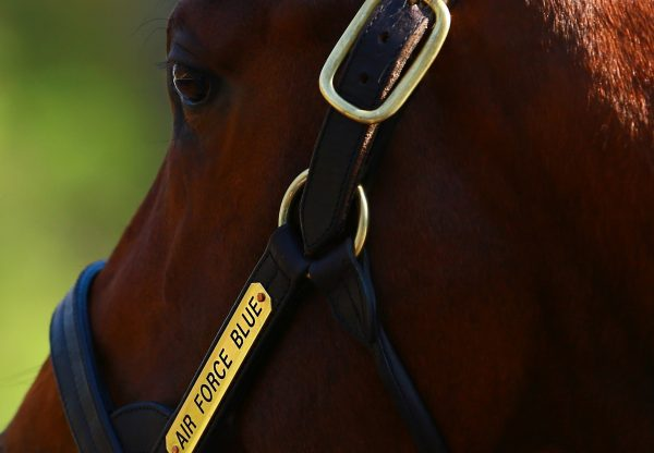 Up (Galileo) selling for $2.2 million at the Keeneland January Horses of All Ages Sale