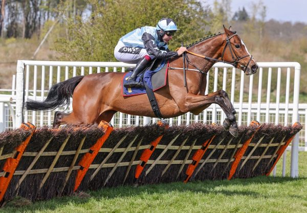 Allavina (Getaway) Wins The Mares Novices Hurdle At Perth