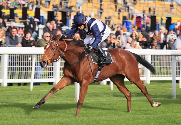 American Kestrel Wins Her Maiden At Newbury 1