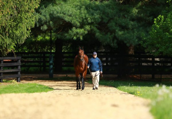 American Pharoah walking shot