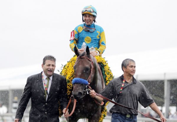 American Pharoah After Winning The Preakness Stakes At Pimlico
