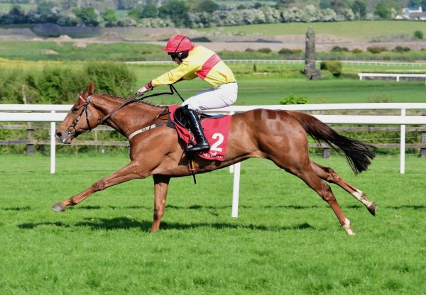 Apple Crumble (Getaway) Wins The Mares Bumper At Punchestown