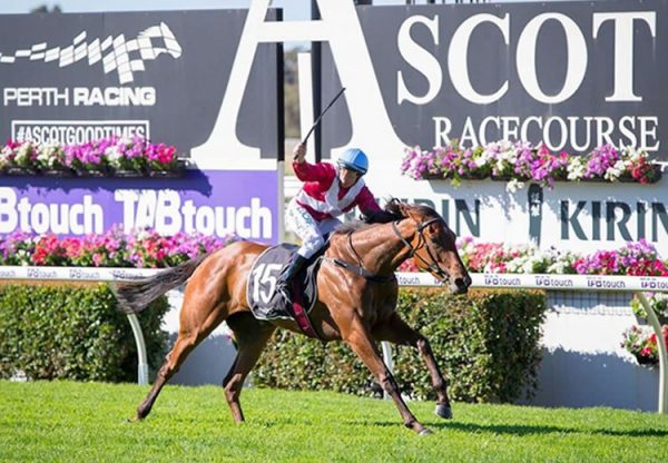 Arcadia Queen (Pierro) winning the G2 WATC West Australian Guineas at Ascot