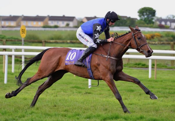 Ashroe Diamond (Walk In The Park) Impresses On Debut At Wexford