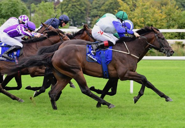 Atomic Jones (Wootton Bassett) Wins The Group 2 Champions Juvenile Stakes At Leopardstown