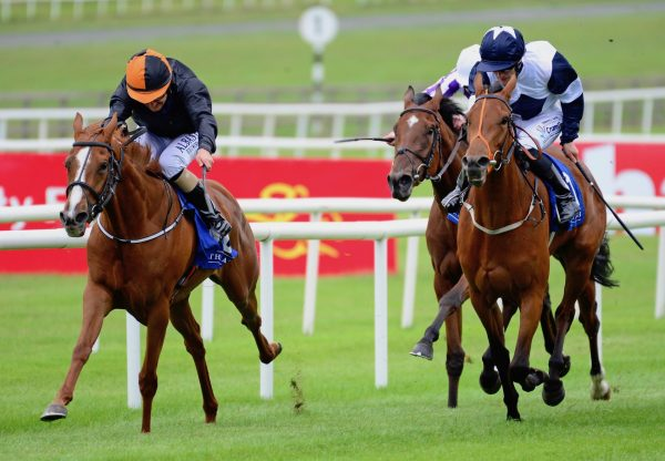 Aunt Bee (Australia) Wins Curragh Maiden
