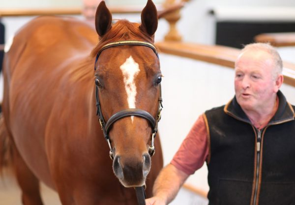 Australia Colt Sells For 300K At Tattersalls October 2 Sale