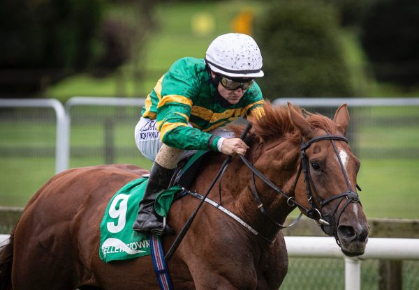 Barrington Court (Mastercraftsman) Winning A Bellewstown Maiden