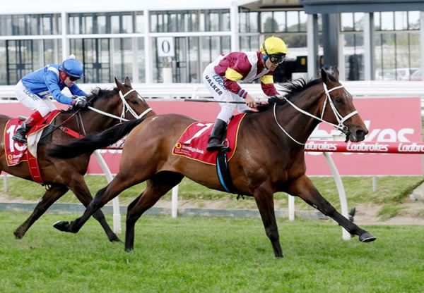 Brimham Rocks (Fastnet Rock) winning the Gr.3 Foundation Cup at Caulfield