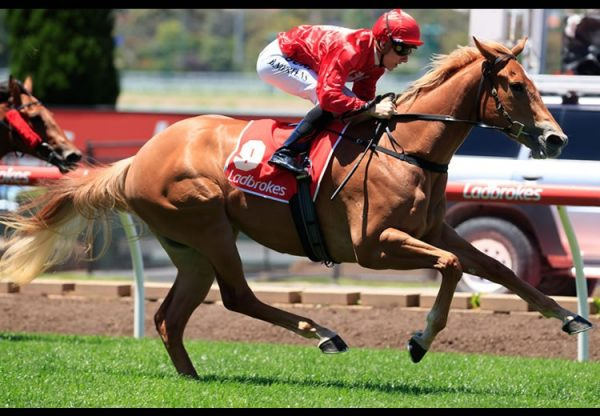 Brooklyn Hustle (Starspangledbanner) winning at Moonee Valley