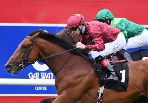 Buckaroo Wins His Maiden At Galway 1