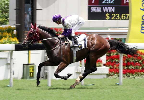 Buddies (So You Think) winning at Sha Tin