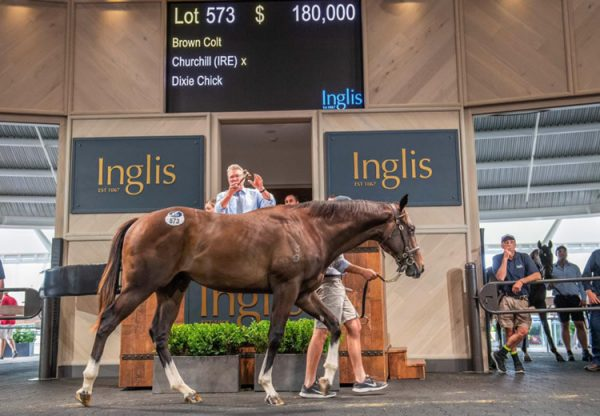 Churchill X Dixiecick yearling colt selling for $180,000 at the Inglis Classic Yearling Sale