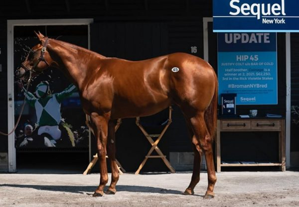 Justify X Bar Of Gold yearling colt