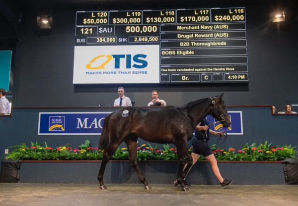 Merchant Navy X Brugal Reward yearling colt selling for $500,000 at the MMGC sale