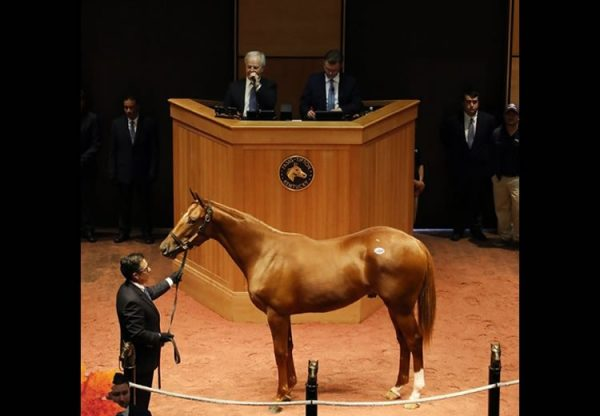 American Pharoah ex Gloat yearling colt selling for $310,000