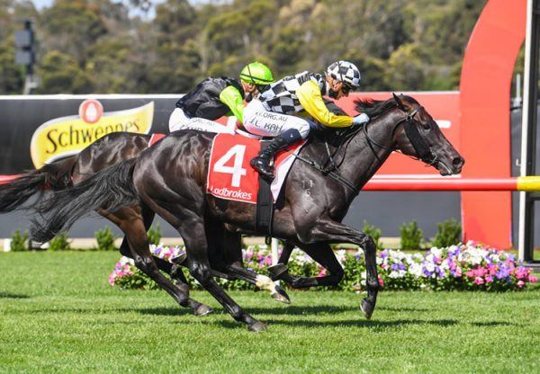 Carif (So You Think) wins the Listed Sandown Cup