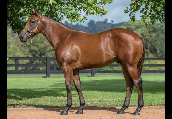Fastnet Rock ex Legally Bay yearling colt conformation shot