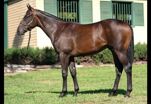 Pierro ex Life on the Edge yearling colt