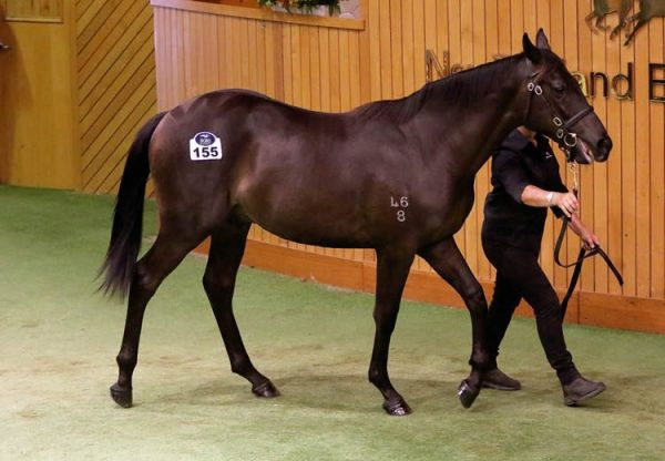 Pierro ex Our Squeezer yearling colt selling for $900,000 at Karaka