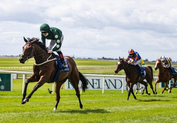 Cairde Go Deo (Camelot) Wins The Loder Irish Ebf Fillies Race at the Curragh