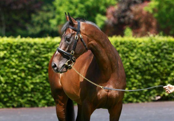 Pride Of Dubai ex Nazca yearling colt
