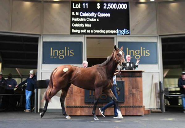 Celebrity Queen selling at the Inglis Chairman's Sale