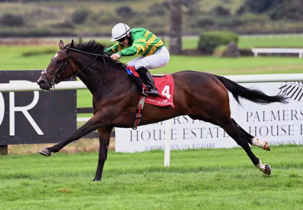 Champion Green (The Gurkha) Wins His Maiden At Punchestown
