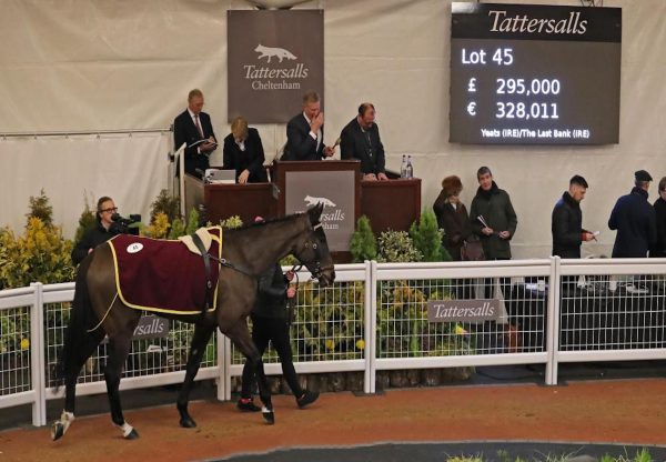 Chantry House (Yeats) Tops The Cheltenham December Sale When Selling For £295000