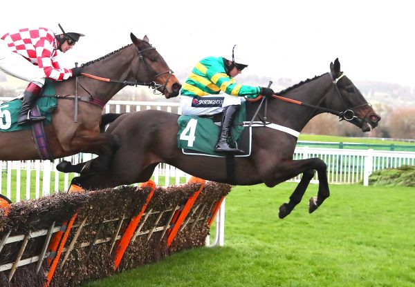 Chantry House Wins His Hurdle Debut At Cheltenham