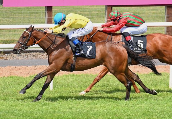 Cherry Bloom (Holy Roman Emperor) Wins Her Maiden At Down Royal