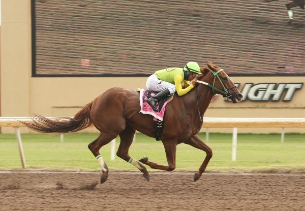 Chief Cicatriz (Munnings) wins the David M Vance Stakes at Remington Park