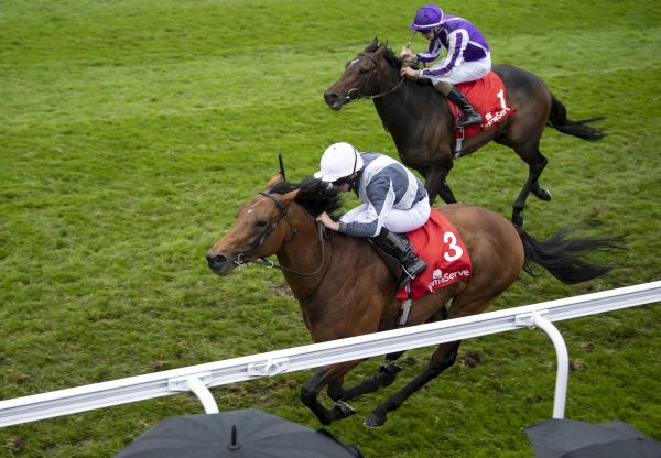 Circus  Maximus (Galileo) Wins The Dee Stakes at Chester